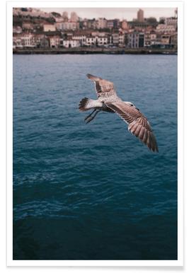 Seagull in Porto poster