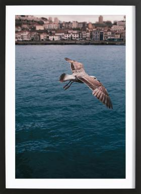 Seagull in Porto Framed Print