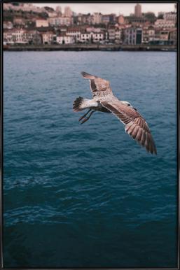 Seagull in Porto ingelijste poster