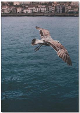Seagull in Porto Notebook