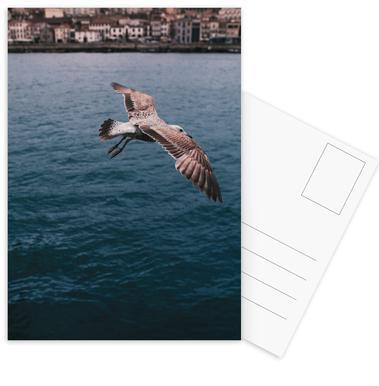 Seagull in Porto ansichtkaartenset