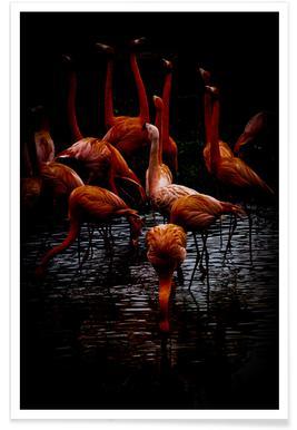 Dark Flamingos Poster