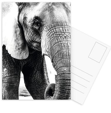 Elephant Trunk ansichtkaartenset