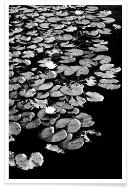Dark Water Lily Poster