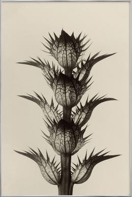 Acanthus Mollis, 1928 - Karl Blossfeldt poster in aluminium lijst