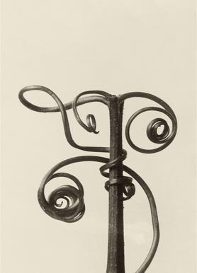 Cucurbita - Karl Blossfeldt canvas doek