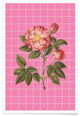 Vintage Rose -Poster