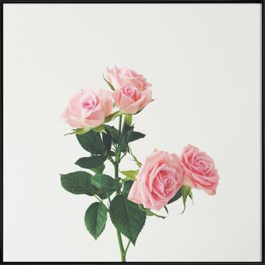 Spring Roses -Bild mit Kunststoffrahmen