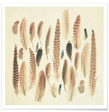 Found feathers