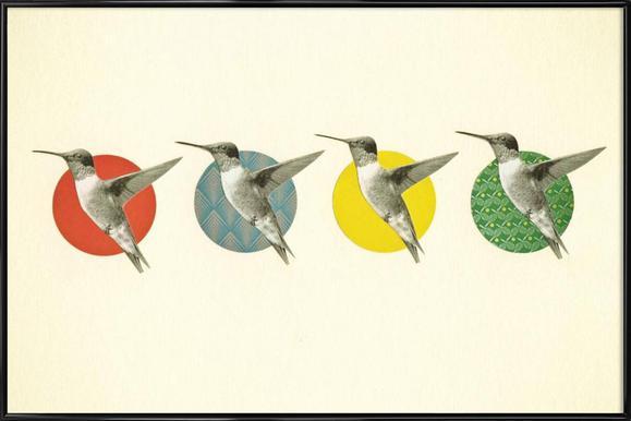 The hummingbird dance