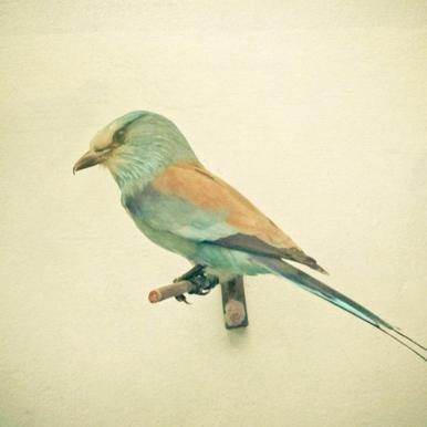 Bird study #2 -Alubild