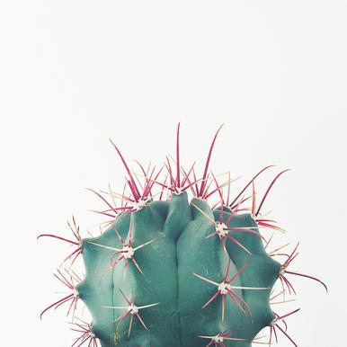 Ferocactus -Leinwandbild