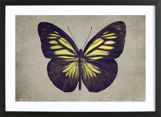 Papillon (yellow) affiche sous cadre en bois