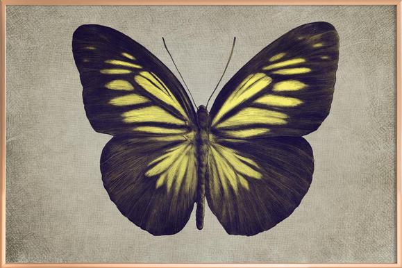 Papillon (yellow) poster in aluminium lijst