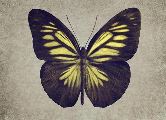 Papillon (yellow) Canvas Print