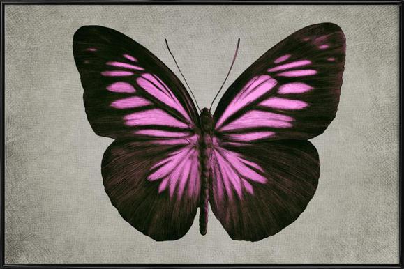 Papillon (pink) ingelijste poster