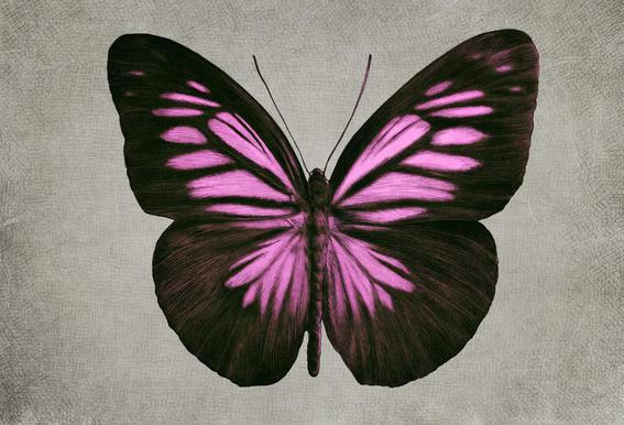 Papillon (pink) tableau en verre