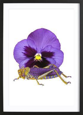 Purple Grasshopper and Viola Framed Print