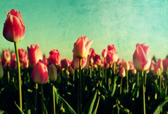How Does Your Garden Grow Acrylic Print