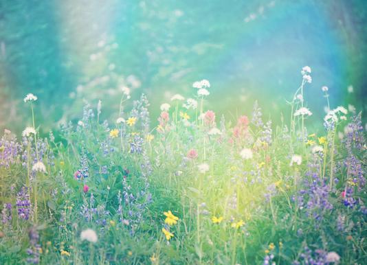 Mountain Wild Flowers 2 Canvas Print