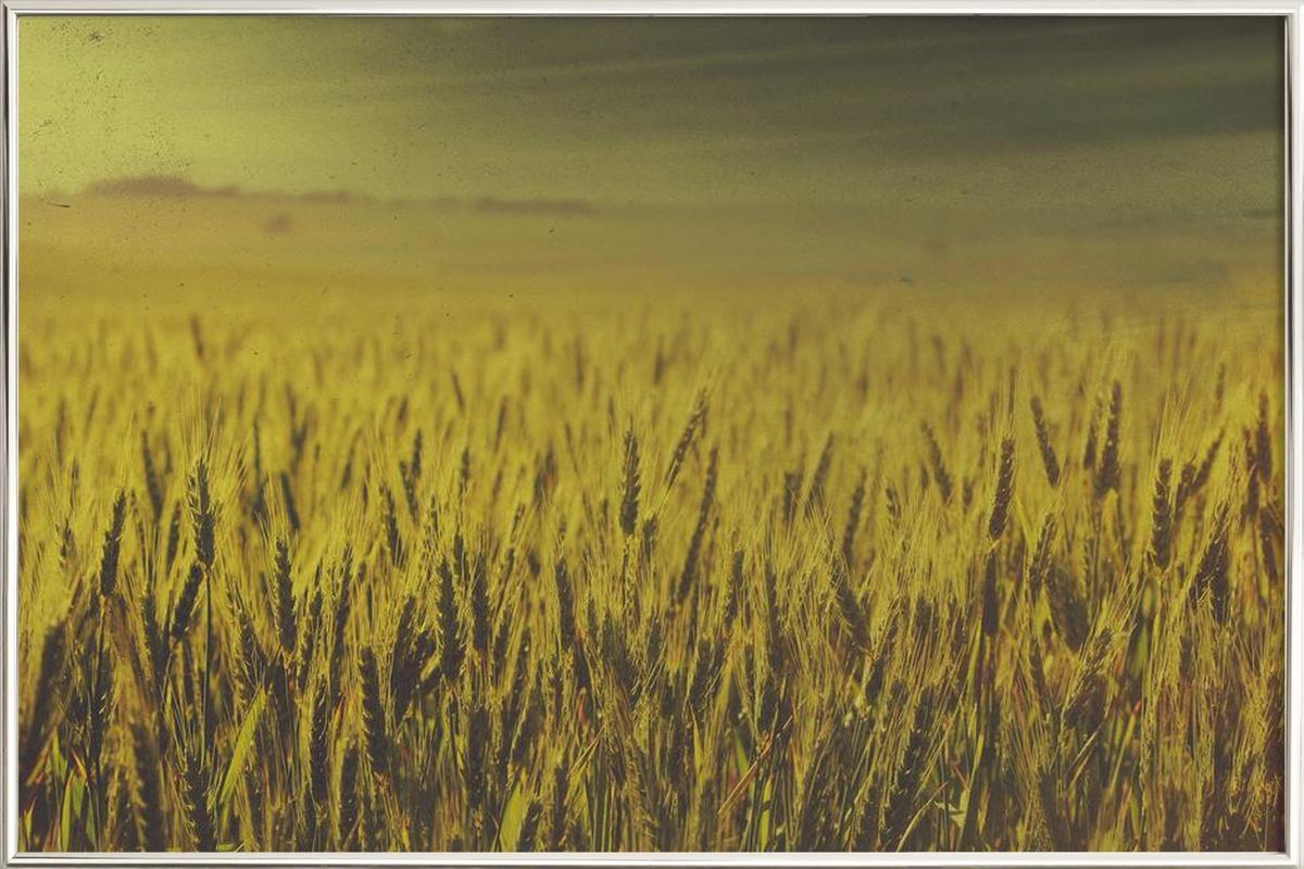 Wheat in Concordia as Poster in Aluminium Frame | JUNIQE