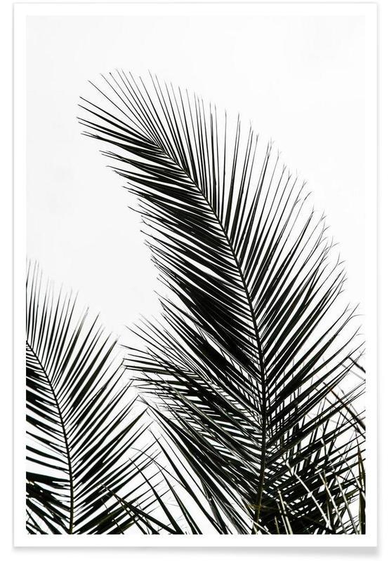 Palm Leaves 1 As Premium Poster By Mareike B 246 Hmer Juniqe