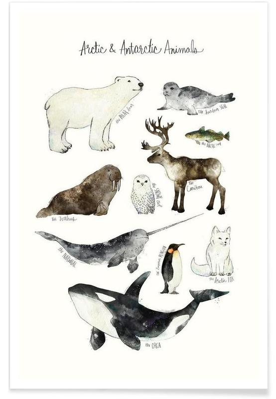 Arctic And Antarctic Animals As Poster By Amy Hamilton