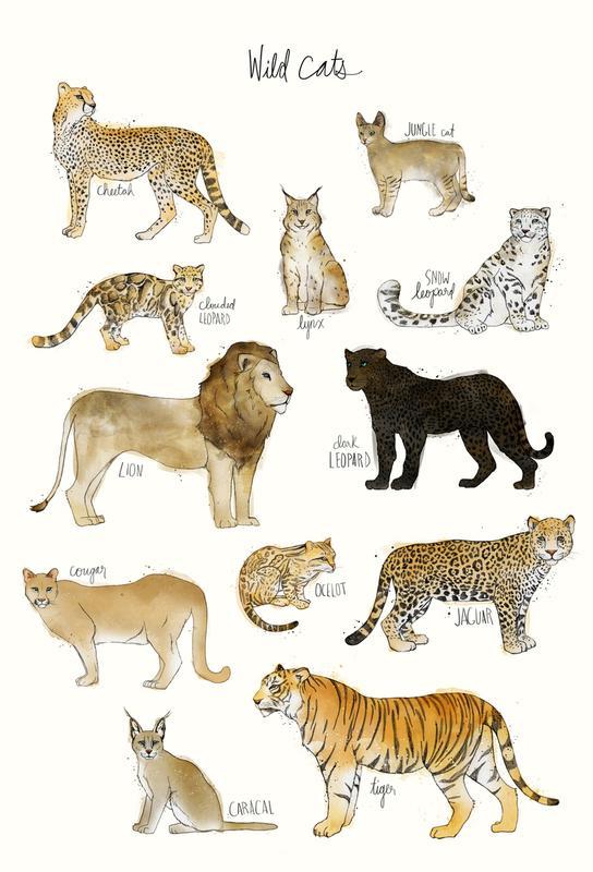 Wild Cats As Aluminium Print By Amy Hamilton Juniqe
