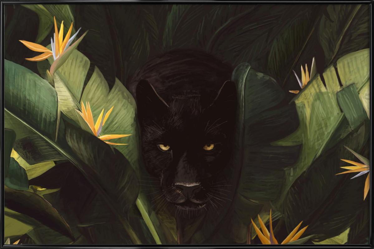 Panther als Poster im Kunststoffrahmen von Florent Bodart   JUNIQE