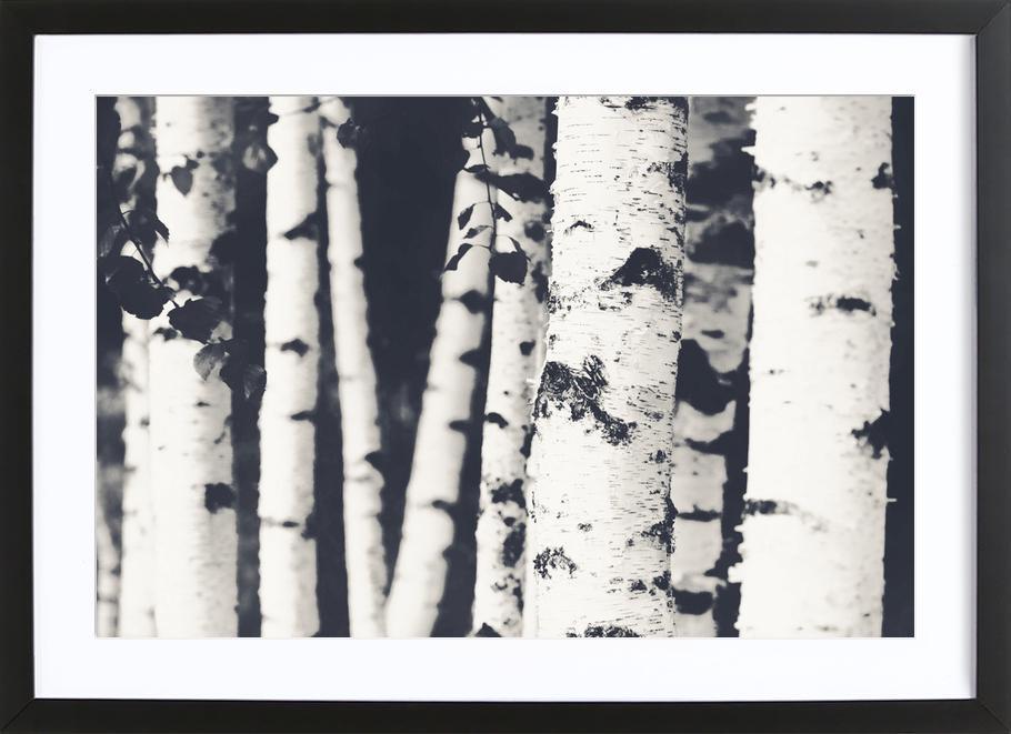 birches als poster im holzrahmen von monika strigel juniqe. Black Bedroom Furniture Sets. Home Design Ideas