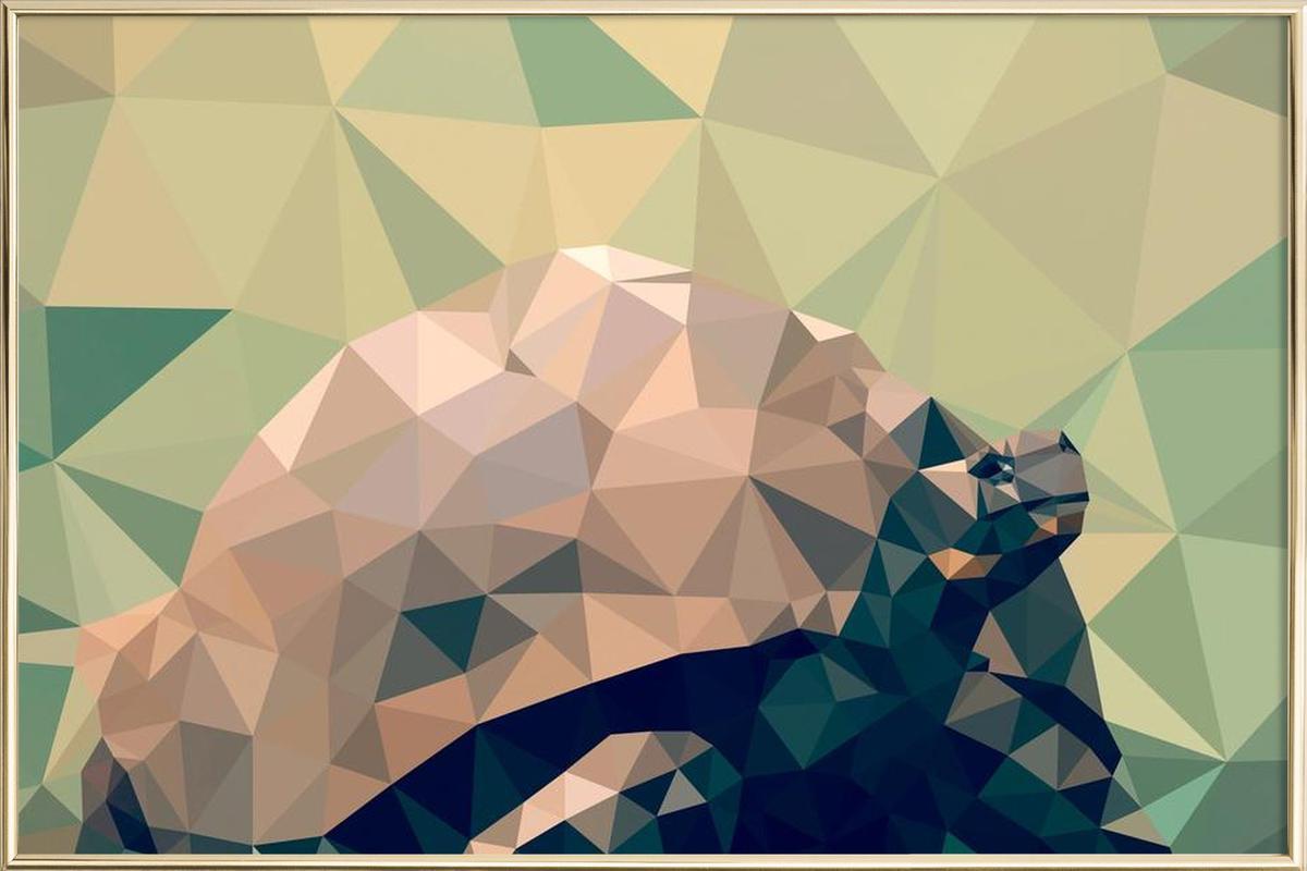 Geochelone nigra as Poster in Aluminium Frame | JUNIQE