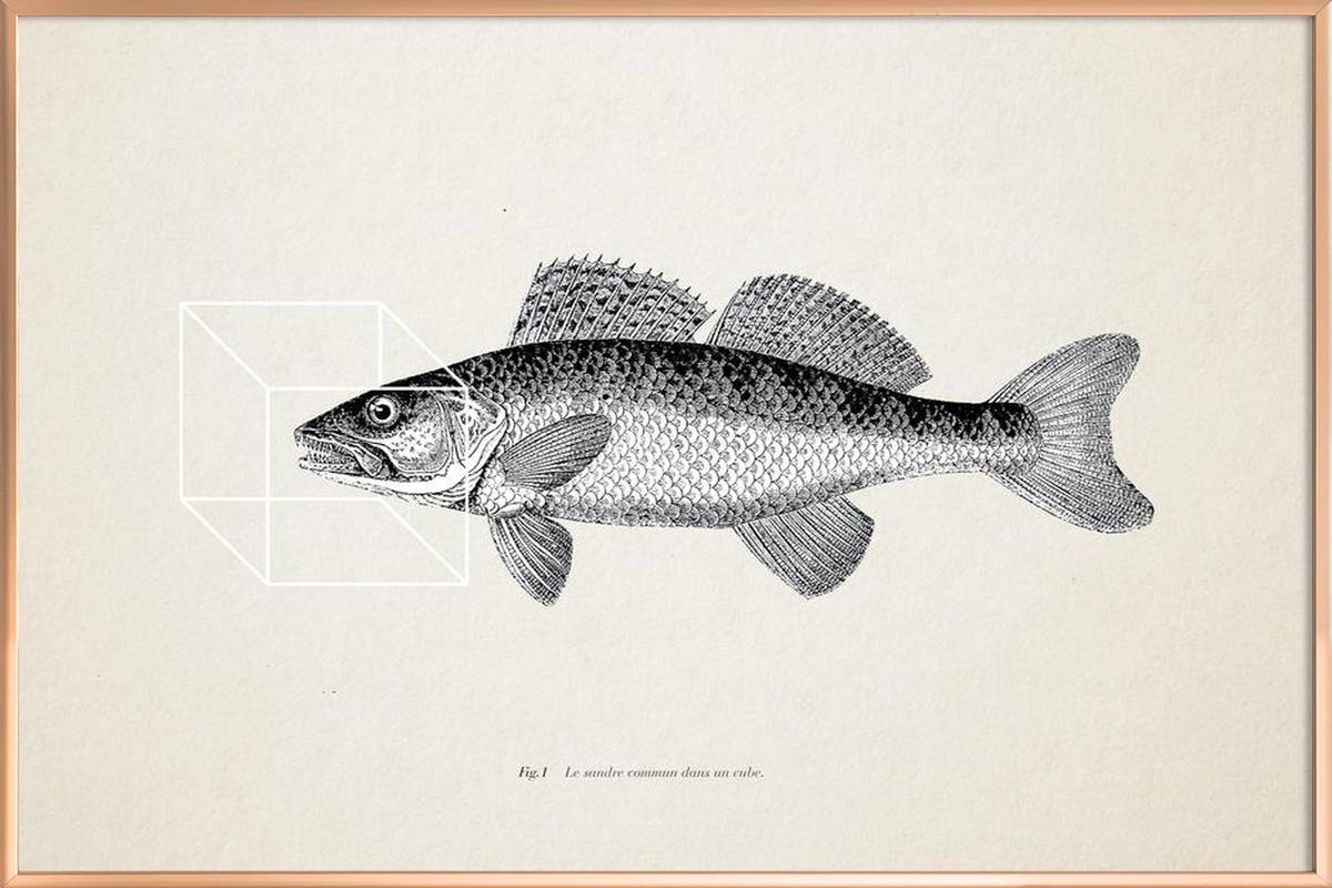 Fish#1 as Poster in Aluminium Frame by Matteo Morelli | JUNIQE
