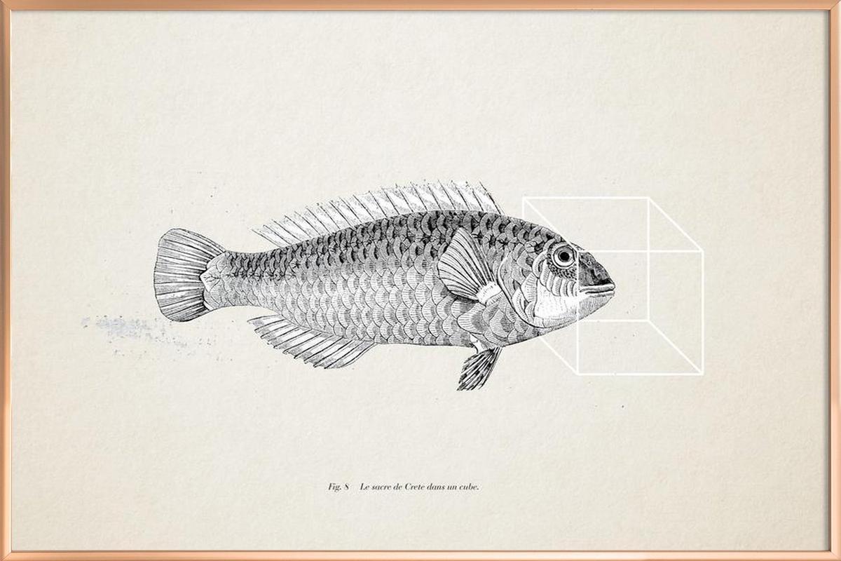 Fish#2 as Poster in Aluminium Frame by Matteo Morelli   JUNIQE