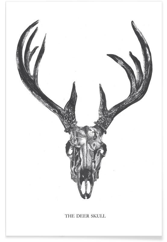 White Tail Deer Sckull Drawn: The Deer Skull As Premium Poster By Mathilde Olsen