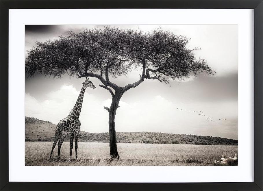 Under The African Sun - Piet Flour as Poster in Wooden Frame   JUNIQE
