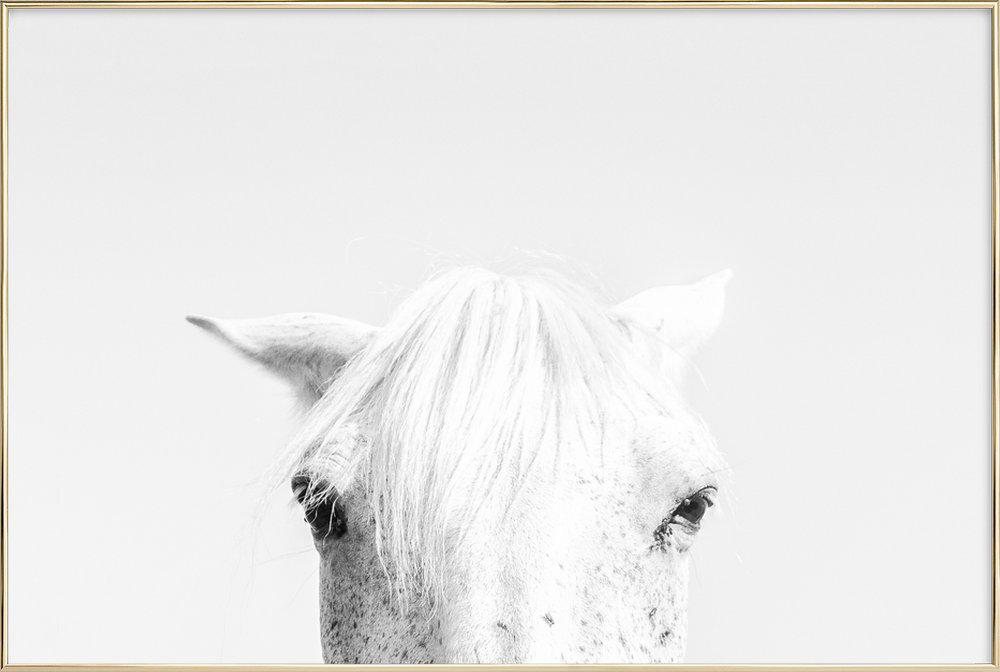 White Horse as Poster in Aluminium Frame by Victoria Frost | JUNIQE