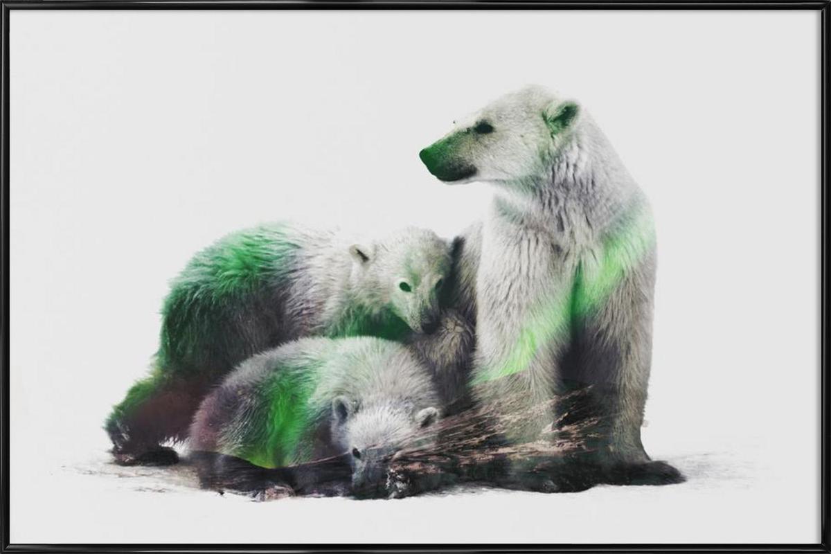 Artic Polar Bear Family as Poster in Standard Frame | JUNIQE