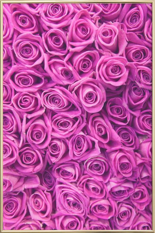 Purple Roses As Poster In Aluminium Frame Juniqe Uk