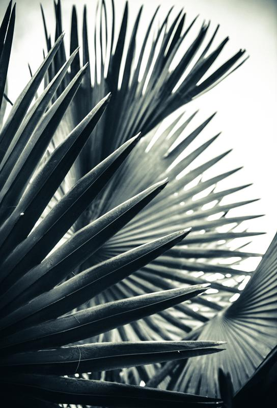 palm shade 2 als alu dibond druck von chris abatzis juniqe. Black Bedroom Furniture Sets. Home Design Ideas