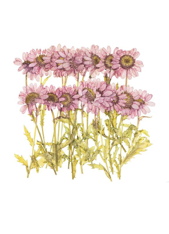 Dried Flowers as Canvas Print | JUNIQE