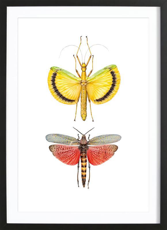 insect 6 als poster im holzrahmen juniqe. Black Bedroom Furniture Sets. Home Design Ideas