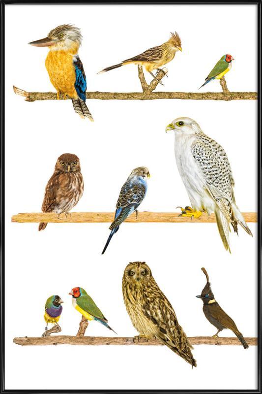 Birds as Poster in Standard Frame | JUNIQE