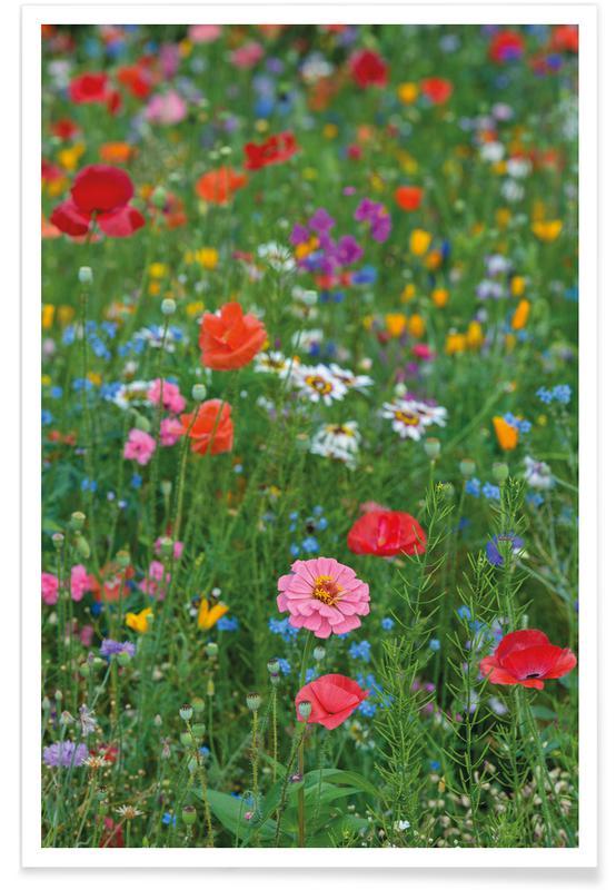 Wild Flowers Field 1 Als Poster Juniqe