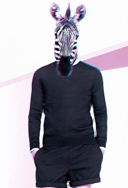 zebra as acrylic glass print by paste in place juniqe