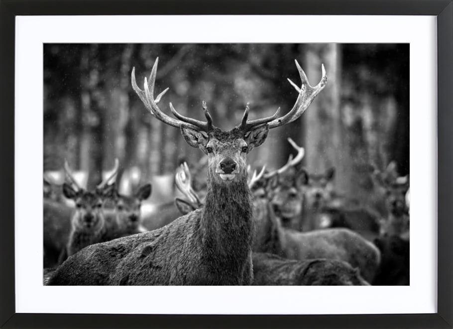 the stag als poster im holzrahmen von juniqe juniqe ch. Black Bedroom Furniture Sets. Home Design Ideas