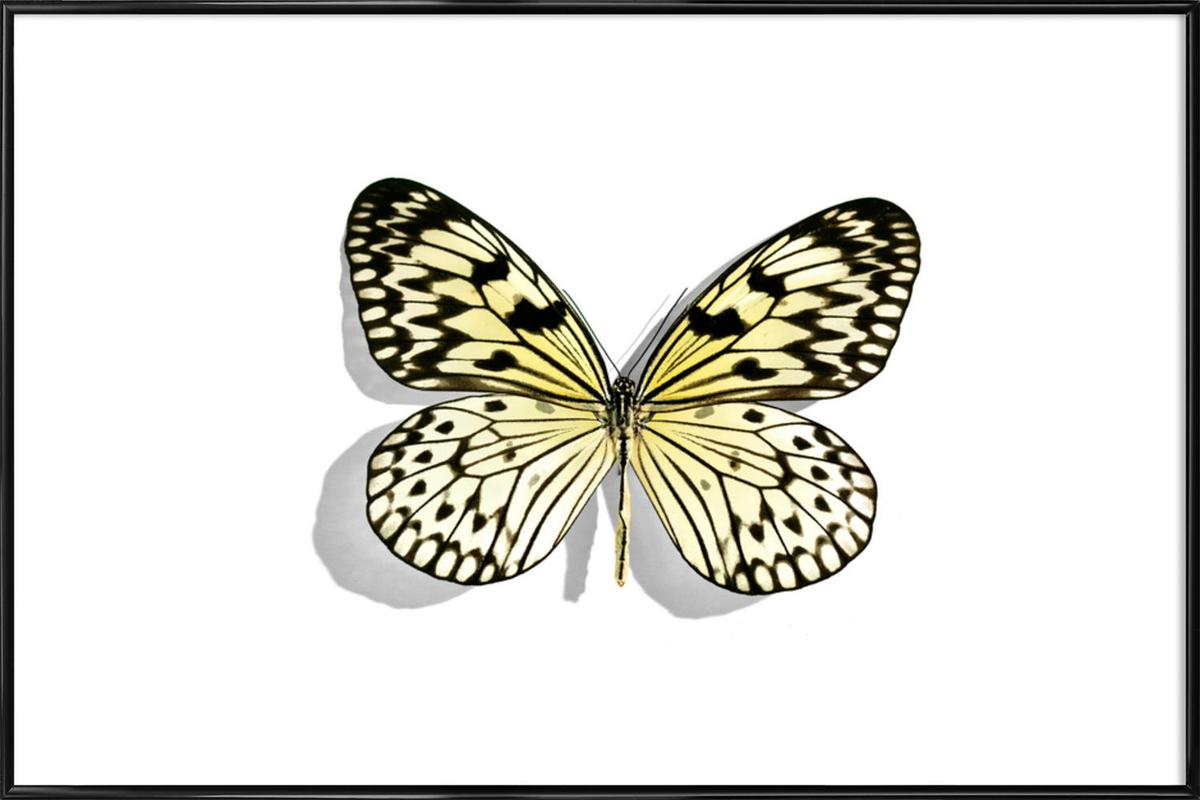 Butterflies 7 as Poster in Standard Frame by Günther Egger | JUNIQE
