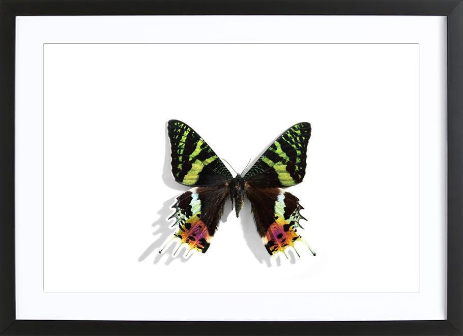 Butterflies 8 as Poster in Wooden Frame by Günther Egger | JUNIQE UK