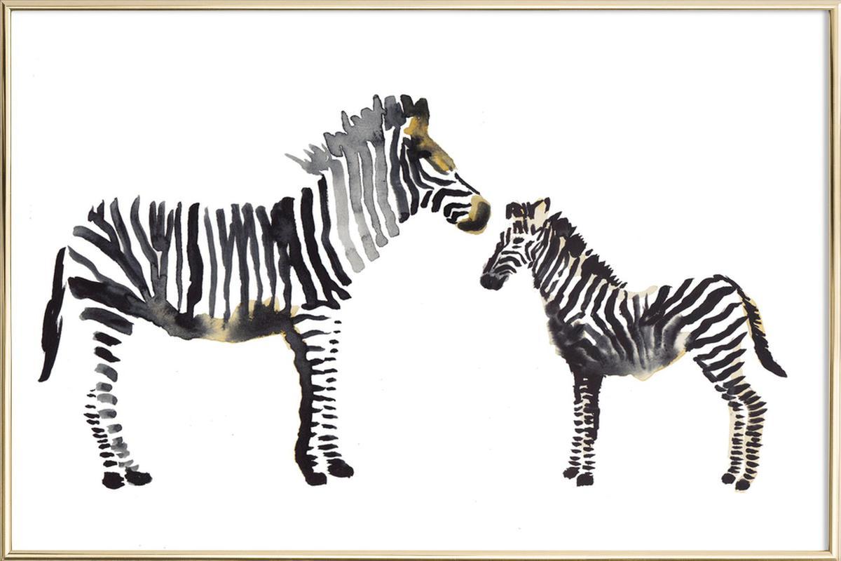 Zebra as Poster in Aluminium Frame by Farina Kuklinski | JUNIQE