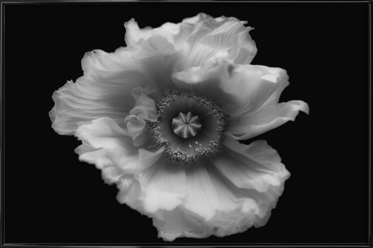 Poppy In Mono As Poster In Standard Frame By Lotte Grnkjr Juniqe