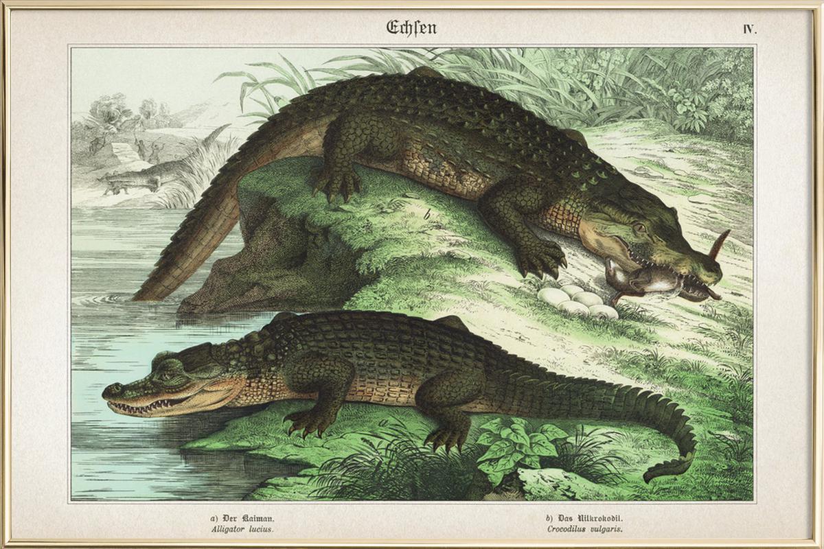 Gemütlich Nil Krokodil Färbung Seite Zeitgenössisch - Malvorlagen ...